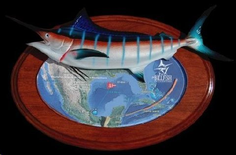 NEW TAG & RECAPTURE TROPHIES BY KING SAILFISH MOUNTS